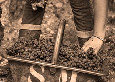 Sociando Mallet - Les vins 2/3